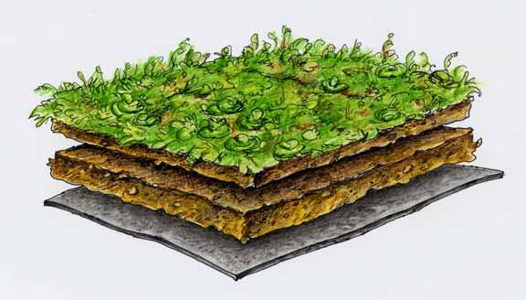 Dachgrün Natur