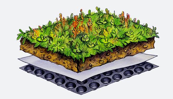 Dachgrün Vario-Standart